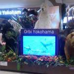 「オービィ横浜」はアニマルスタジオ以外も楽しい!最新テクノロジーも採用されている